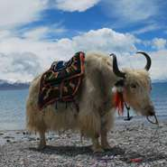 9 Days Tibet Everest Base Camp and Namtso Lake Tour